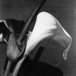 1925_negro_e_branco_calas