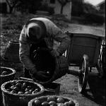 1901-Frutos da terra
